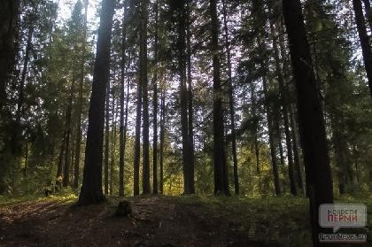 В пермских лесах прошел первый этап противоклещевой обработки
